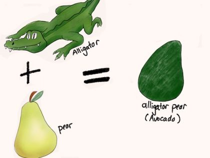 例えば、アボカドがアメリカに広まったとき、初めて見た人々は「へ〜、見たことない。でも皮がワニっぽいなぁ。形は洋梨っぽい」と思いました。それで、アボカドは最初に「Alligator pear」(ワニ洋梨)と呼ばれていました。